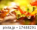 秋のマクロカット 17488291