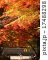 京都の紅葉 17488298