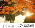夕方と紅葉 京都円山公園 17488305