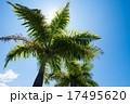 ヤシの木 17495620