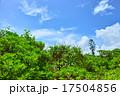宮古島の浜辺に生えるアダンの木と青空 17504856