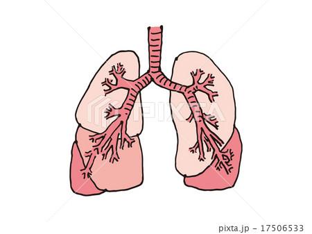 肺の構造(文字なし) 17506533