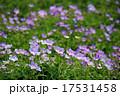 Purple wild flower field near mountain in India 17531458