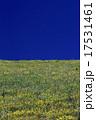 Yellow wild flower field near mountain in India 17531461