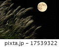 満月 17539322