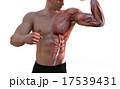 マッスル 筋肉隆々 ボディービルダーのイラスト 17539431
