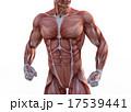 マッスル 筋肉隆々 ボディービルダーのイラスト 17539441