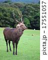 奈良公園の鹿 17551057