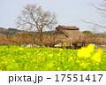 菜の花 里山 晴れの写真 17551417