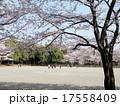 春の公園 桜の中でゲートボールをする 17558409