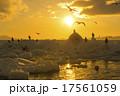 朝日 オオワシ 流氷の写真 17561059