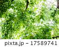 樹木 樹 ツリーの写真 17589741