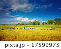 The farmers were harvesting rice. 17599973