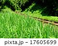 小湊鉄道 17605699