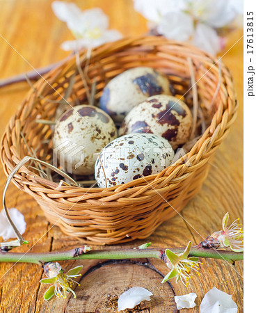 quail eggsの写真素材 [17613815] - PIXTA