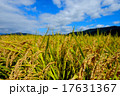 稲 秋 水田の写真 17631367