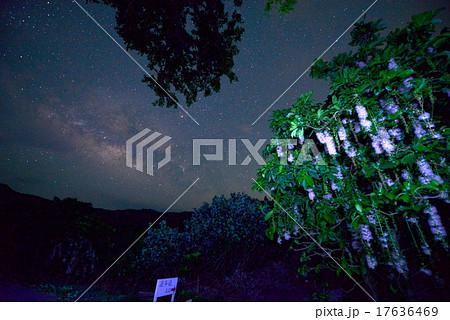 沖縄 さがりばな 天の川 17636469