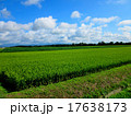 田んぼ 水田 雲の写真 17638173