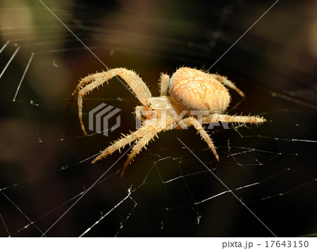 Big spider on the web