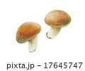 椎茸 茸 植物のイラスト 17645747