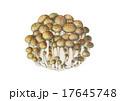 茸 しめじ 植物のイラスト 17645748