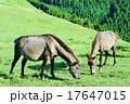 都井岬 野生馬 丘の写真 17647015