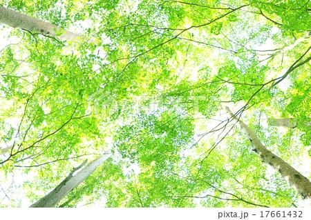 緑 17661432