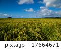 田園 田園風景 田んぼの写真 17664671