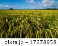 田園風景 田園 田んぼの写真 17678958