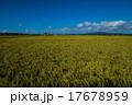 田園 田園風景 田んぼの写真 17678959