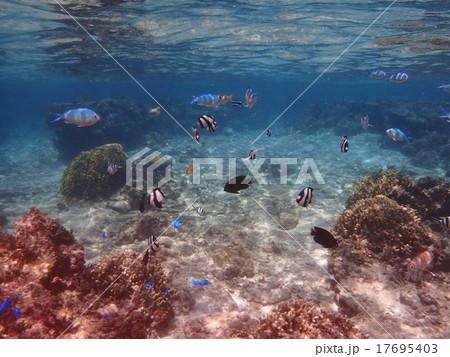 珊瑚礁と熱帯魚 17695403