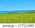 サトウキビ畑と伊良部大橋 17721980