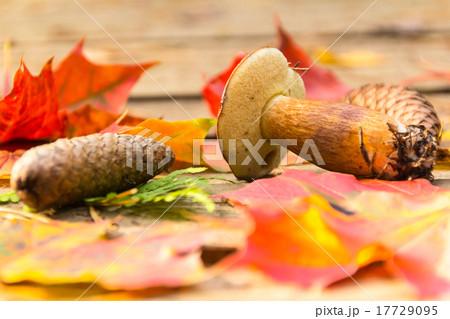 Mushroom, fir cones, autumn leaves of maple 17729095