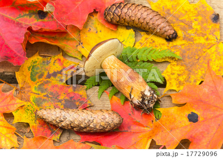 Mushroom, fir cones, autumn leaves of maple 17729096