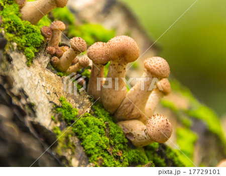 Mushrooms in the autumn forest 17729101