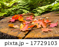 Autumn leaves of maple on stamp 17729103