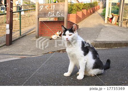 夕焼けだんだんの猫 17735369