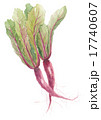 松坂赤菜 マツザカアカナ 17740607