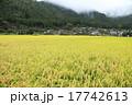 稲作 田舎 稲の写真 17742613