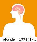 ベクター 人間 内部のイラスト 17764341