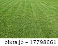 Natural green trimmed grass field 17798661
