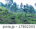針葉樹林 17802303