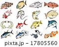魚のイラスト 17805560