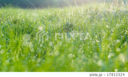 Morning meadow with dew