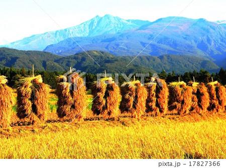 東北地方の米どころは収穫の秋をむかえて鳥海山山麓の刈り取った稲のはざ掛け風景です後ろに鳥海山 17827366