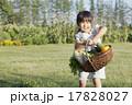 家庭菜園 17828027