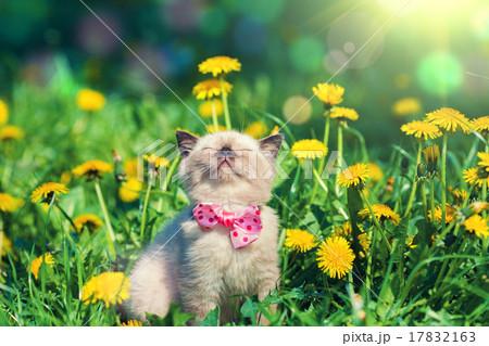 little kitten wearing bow tie on the grass