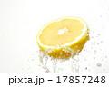 グレープフルーツ シズル感 17857248