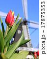 ふなばしアンデルセン公園 アイスチューリップ チューリップの写真 17875353