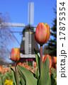 ふなばしアンデルセン公園 アイスチューリップ チューリップの写真 17875354